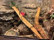 Holz-Terrarium im Maori Stil inkl