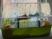 Hamster Käfig mit allem Zubehör