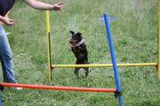 Online Hunde Training Hundeschulen