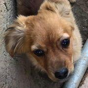 Pflegestellen für unsere Hunde gesucht