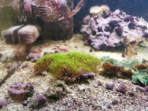 Lebendgestein + 2 Ocellaris Meerwasser