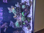 Meerwasser Inhalt eines Red Sea