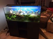 Aquarium 100 x 45 x