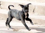 Linzer aufgewecktes Hundemädchen ca 4