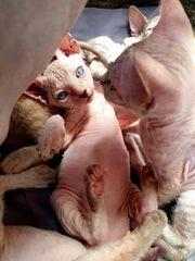 Cleo Baby mit blauen Augen