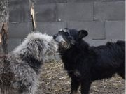 2 lebensfrohe Terrier-Mix Hunde Doris