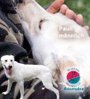 Pauli - unser aktiver Familienspezialist