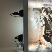 1 0 Varanus Gilleni Terrarium