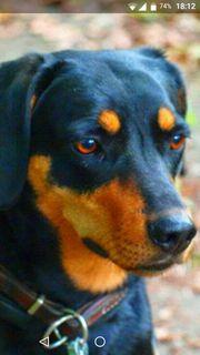 Hundebetreuung - Urlaubsbetreuung