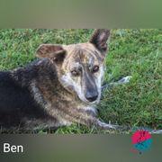 Ben - Sucht seinen Best Friend
