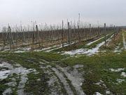 Obstbauernhof in guter Lage