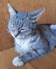 Rose eine ruhige junge Katze