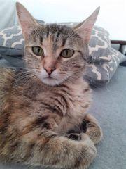 Katze Tilda sucht liebevolles Zuhause