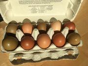 Bruteier meiner Easter Eggs Buntleger