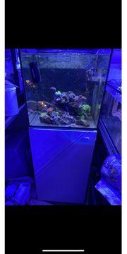 Meerwasseraquarium komplett mit Besatz und