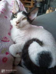 Dringend Zuhause gesucht Katzenbaby