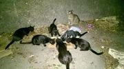 Sachspenden für Tierschutz