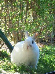 Kaninchen Smartie sucht ein neues