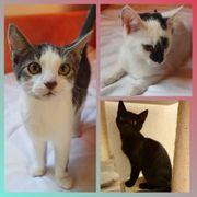 3 wunderschöne Kitten Baby Katze