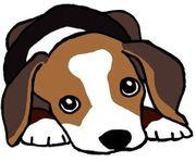 Suche nach einem Pflegehund