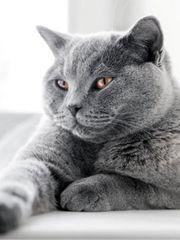 Mitbewohner Katze gesucht