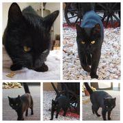 Katze Lucy 1 Jahr kastriert