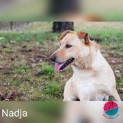 Nadja- unser kleines Schlitzohr