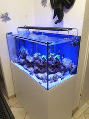 Meerwasser aquarium 1 5 jahr