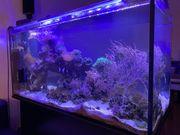 Meerwasseraquarium komplett oder nur Inhalt