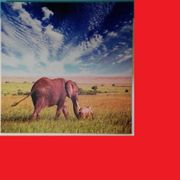 Bild Leinwand afrikanisch Elefant Baby