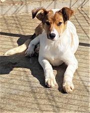 Bezauberndes Hundekind Axa sucht Ihre