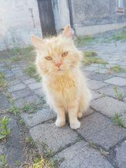 Sucht jemand eine ältere Katzendame