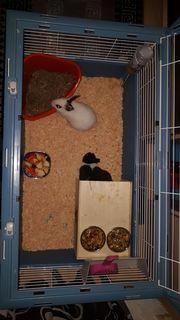 zwei junge Kaninchen