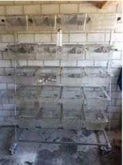22 Makrolonboxen mit Edelstahl Ständer