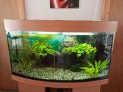 Aquarium komplett mit Schrank Pumpe