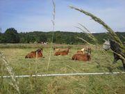 Pferdepensionsstall hat Einstellplatz frei-stadtnah-