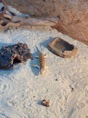 2 Sandfische suchen neues Zuhause
