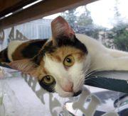 Kätzchen Lou sucht ihre Dosis