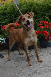 Bora - Eine bezaubernde Hundedame sucht