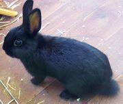 Kaninchen und Zubehör