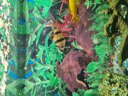 Fische