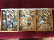 Konvolut - Ammoniten - Fossilien- Buttenheim 80