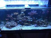 komplettes merrwasser Aquarium zuverkaufen