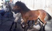 Verkauf von mehreren Pferden