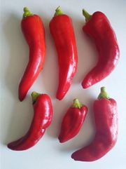 Diverse Gemüsesamen zu verkaufen Chili
