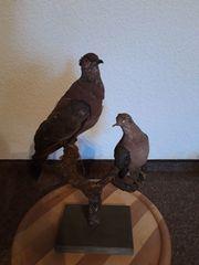 Vogelpaar präpariert