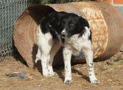 TIERSCHUTZ ANNIE harmoniebedürftiger defensiver Junghund