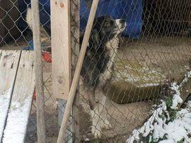 Bild 4 - SARA - wäre glücklich als Einzelhund - Rabenau