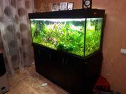 Aquarium 480 Liter
