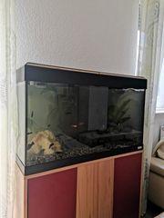 Aquarium 120 Liter komplett mit